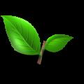 Fresh_Tea_Leaves_(Primitive_Plus)